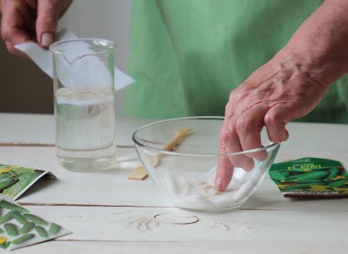 Можно ли опрыскивать огурцы перекисью водорода в качестве удобрения