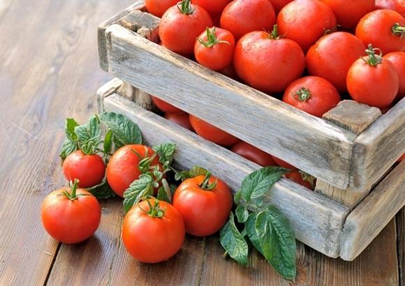 томат третьяковский в ящике
