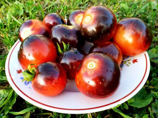 томат черника на тарелке