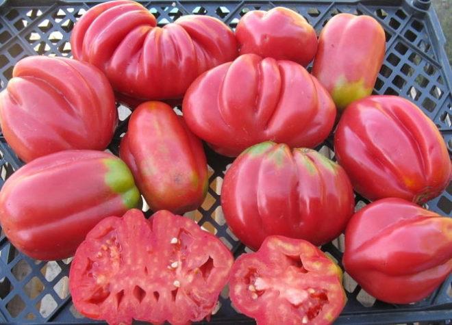 американский ребристый томат внутри
