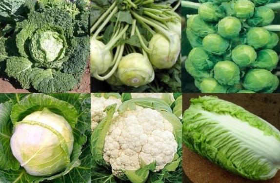 разновидности капусты
