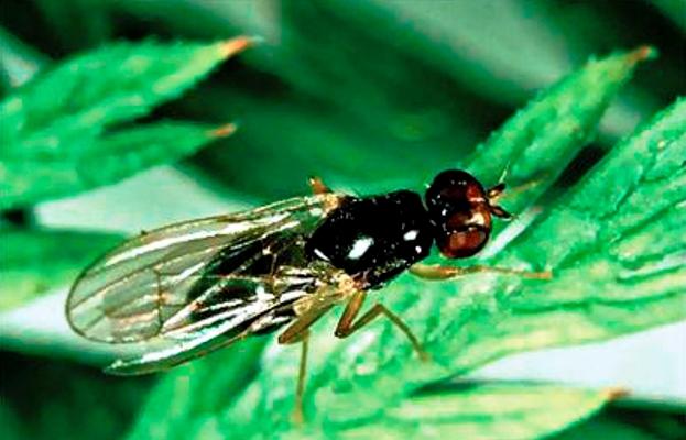 муха на листке