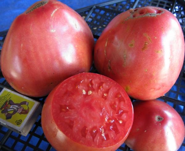 томат пудовик в разрезе