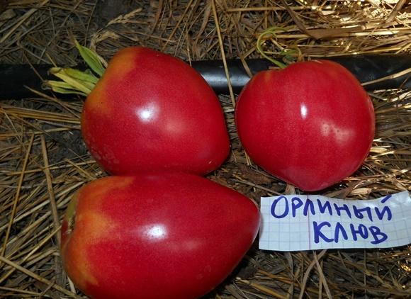 внешний вид томата орлиный клюв