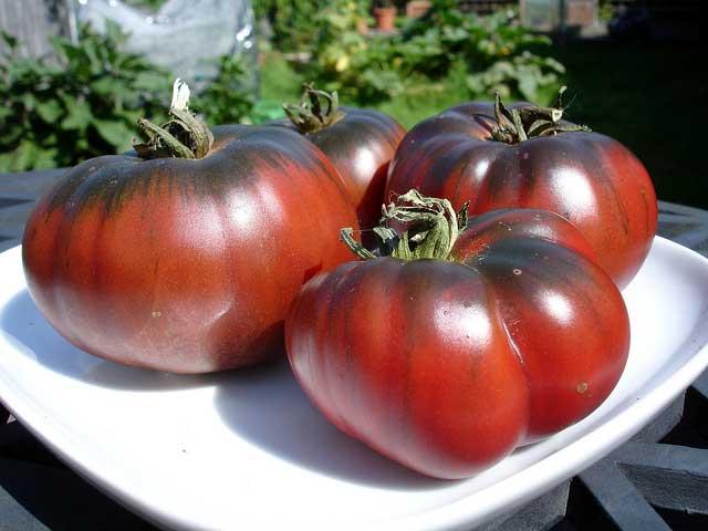 томат негритенок на тарелке