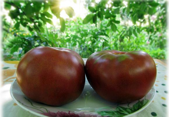 Тасманский шоколад томат