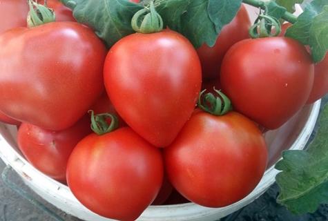 томат клубничное дерево в миске
