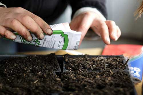 выращивание семян