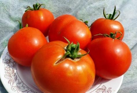 томат лабрадор на тарелке