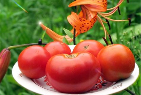 томат Сибирячок на тарелке