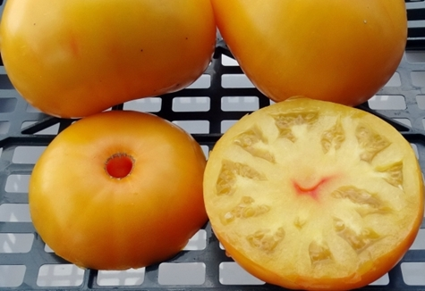 внешний вид томата Бабушкин поцелуй
