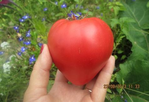 внешний вид томата Китайский Розовый