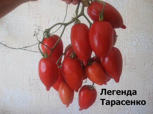 внешний вид томата легенда тарасенко