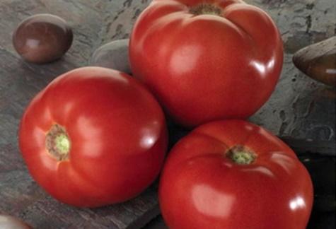 томаты белла роса на столе
