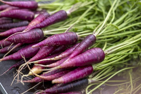 Фиолетовая морковь в огороде