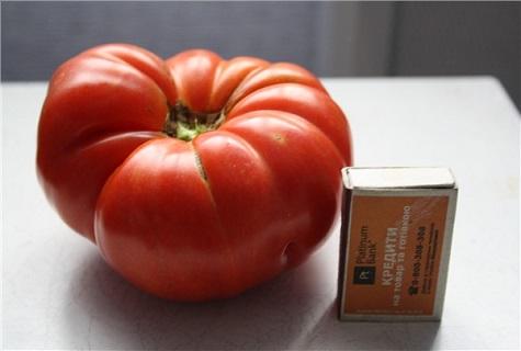 томат и спички