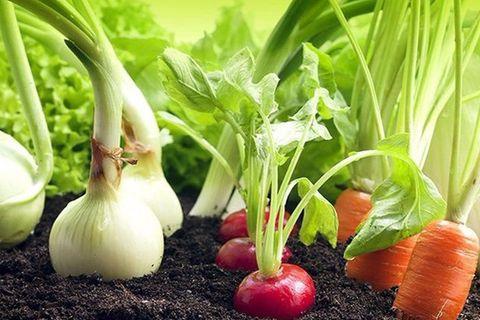 овощи по соседству