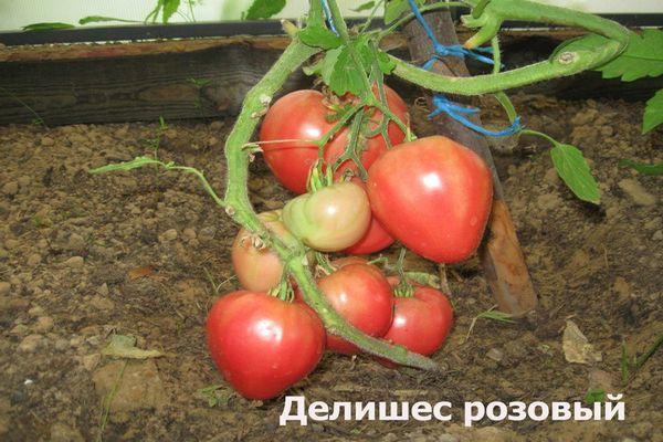 Характеристика и описание сорта томата Делишес