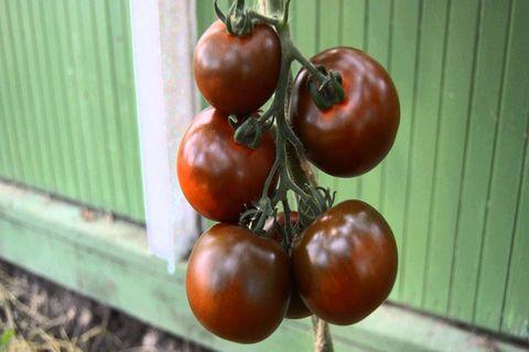 томат кумато