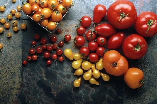 разнообразие томатов на столе