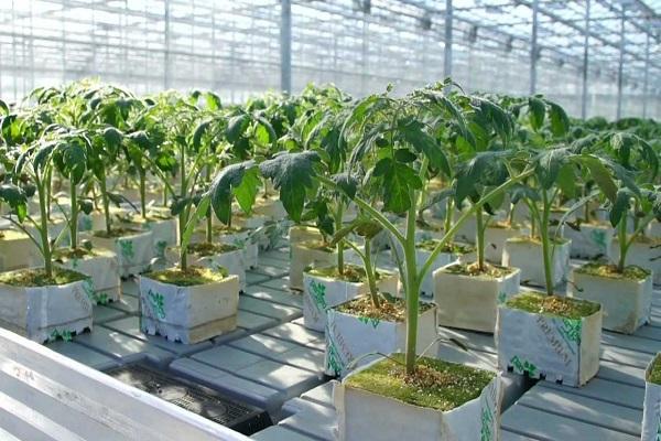 этапы выращивания