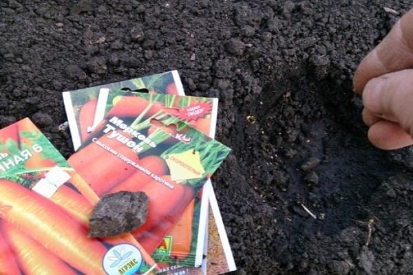 сеять морковь