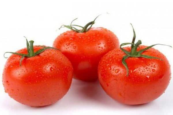 томат мечта огородника уход за ним
