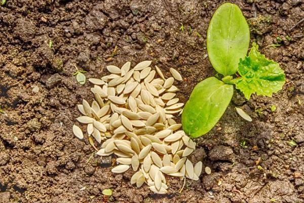 семена на земле