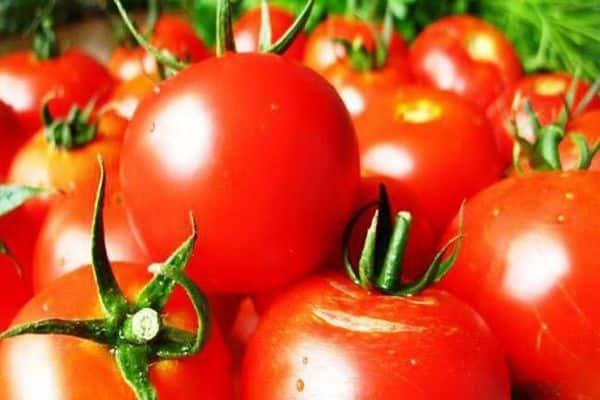 стойкость томата