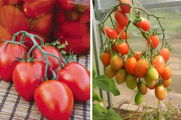 Царские томаты