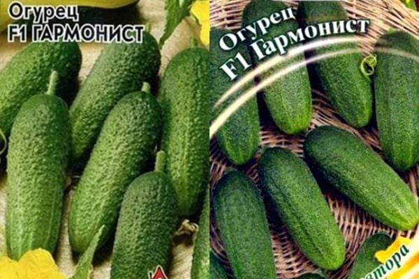 препарат киллер и картофель
