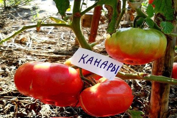 плоды округлые