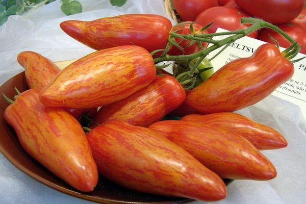 томат шерхан