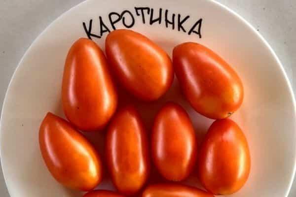 томат каротинка