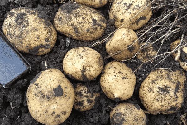 золу и компост