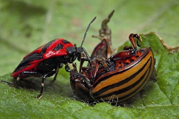 наших насекомых