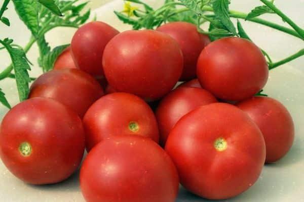 место для томата