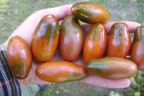 помидоры сливки