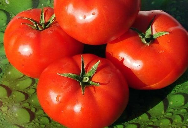 томаты Таунсвиль F1