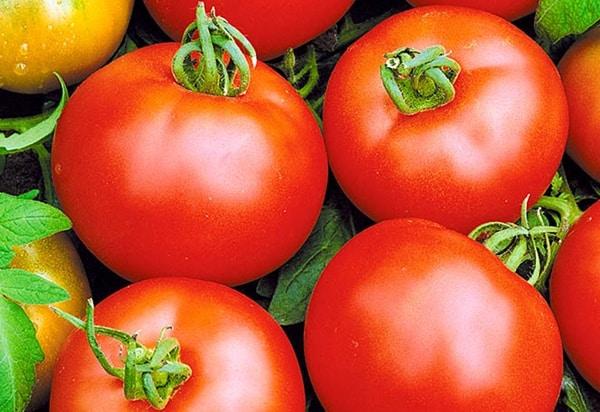 внешний вид томата восход