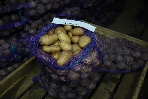 рассыпчатая картошка