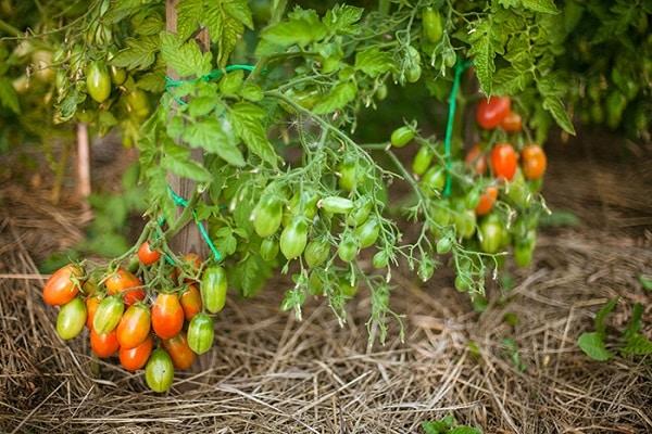 возможность выращивания
