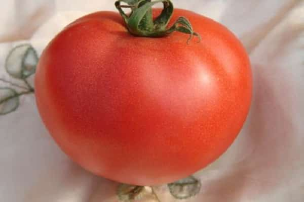 томат Эля