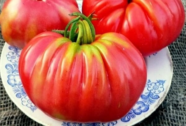 томат Розамарин фунтовый на тарелке