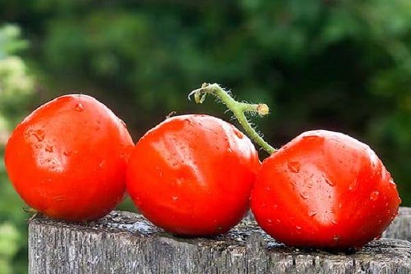 выращивание производят