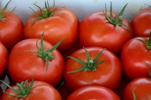 созревания овощей