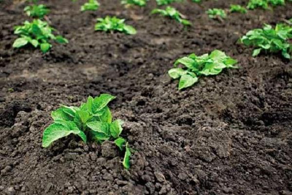 качественный урожай