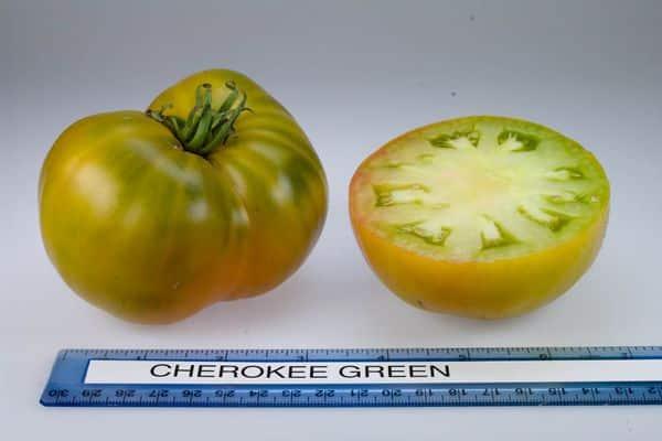 измерение помидора