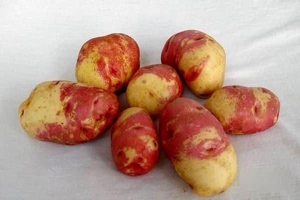 картофеля Иван-да-Марья