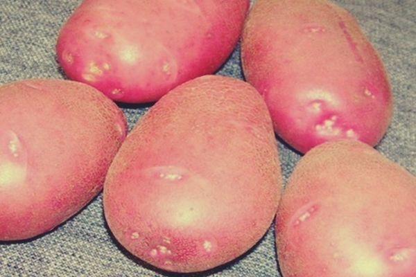 картошка на столе